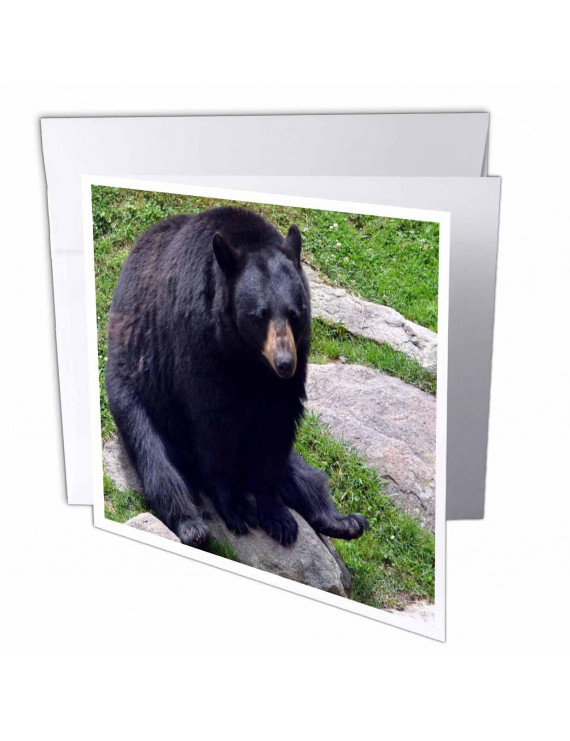 3dRose Black Bear North Carolina Bear, Greeting Cards, 6 x 6 inches, set of 12